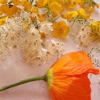 3333 1 - Как привести в нормальное состояние помятые цветы
