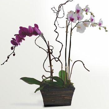 orhideynaya kompozitsiya 7975 b - Использование искусственных цветов в оформлении экстерьера мегаполиса