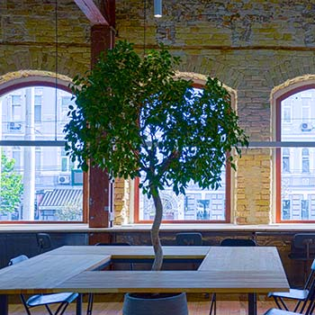 ozelenenie office kiev start - Искусственное озеленение ресторана или кафе, и его особенности